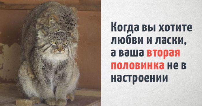 16 котиков, которые очень красноречиво отражают человеческие ощущения