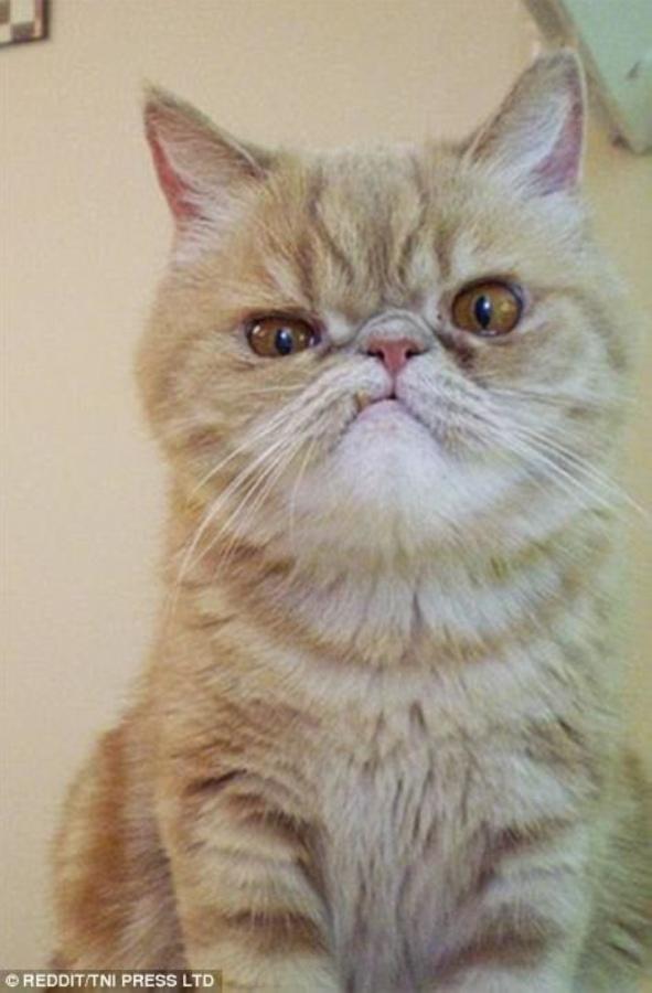 Даже котики не всегда идеально выглядят