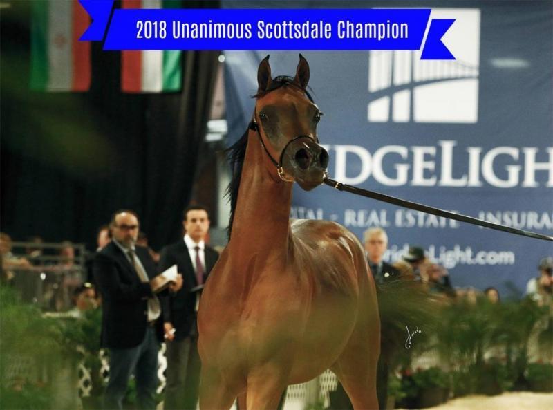 Эль Рей Магнум - первая лошадь, похожая на персонажа Disney
