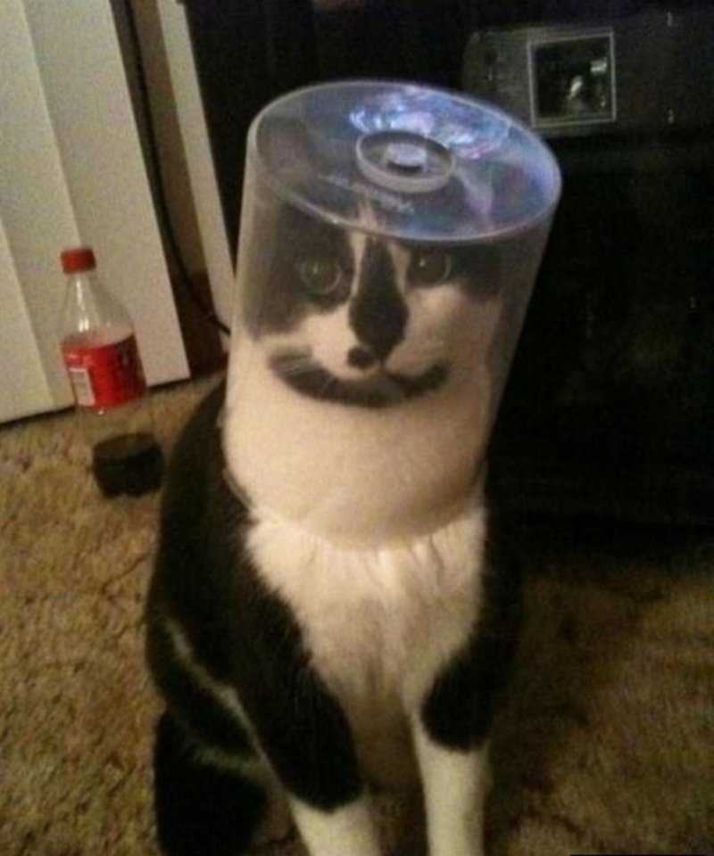 25 котиков, у которых серьёзные проблемы (26 фото)