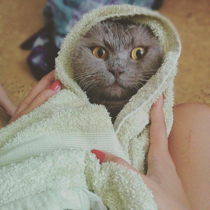 Фото котиков, которые непременно отмостят своим хозяевам за купание