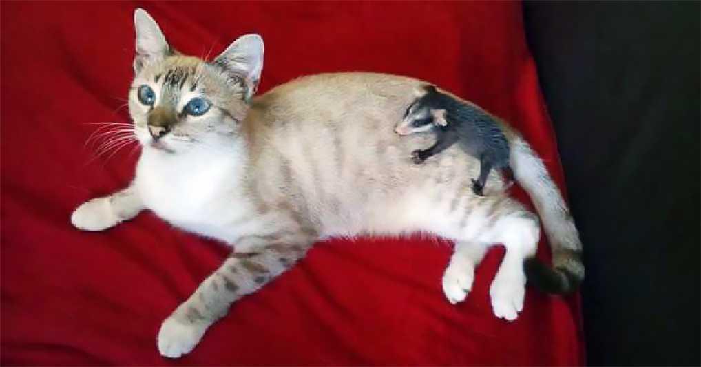 Заботливый кот повторил поступок своих хозяев: подобрал на улице и принес в дом несчастного зверька