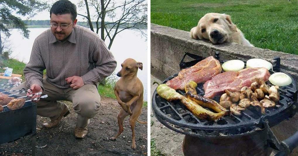 25 забавных собак, которые не могут скрыть своего желания поесть