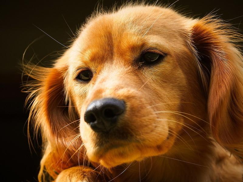 Собаки действительно умеют удивлять своими отважными поступками!