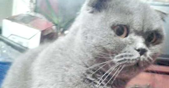Из грустных глаз текли слезы. Хозяева принесли усыплять молодую и здоровую кошку