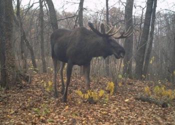 Возрождение природы в Чернобыле (12 фото)