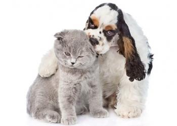 Услуги по передержке животных