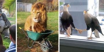 Пользователи Сети поделились неоднозначными фотографиями животных