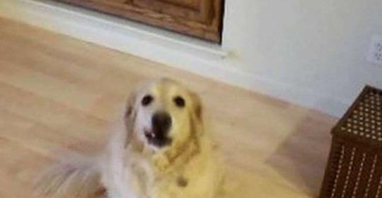 Собаке сказали убраться в доме
