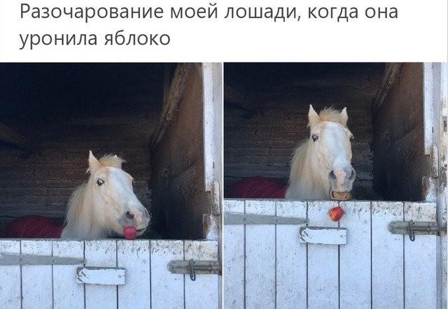 Животные, которые поняли значение слова «провал» (16 фото)
