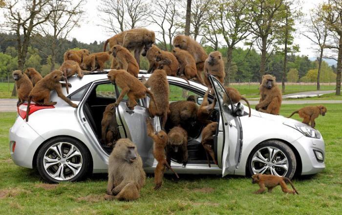 Животные в фотографиях (21 фото)
