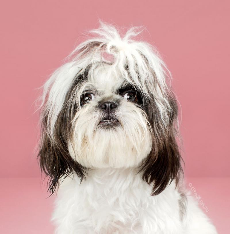 Собаки до и после стрижки (21 фото)