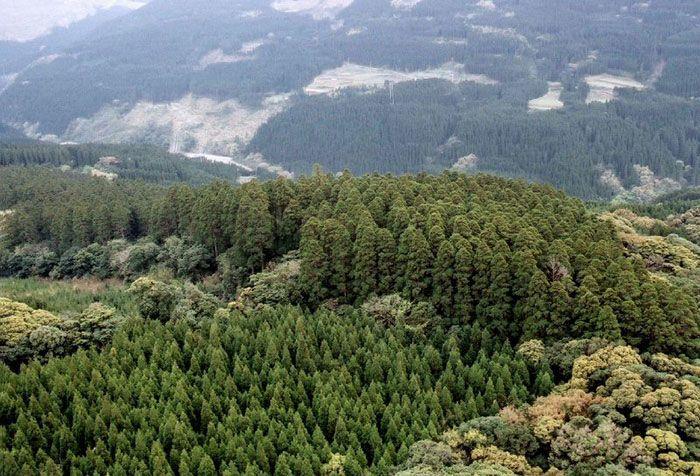 Полувековой эксперимент, или кто расставил деревья в японском лесу